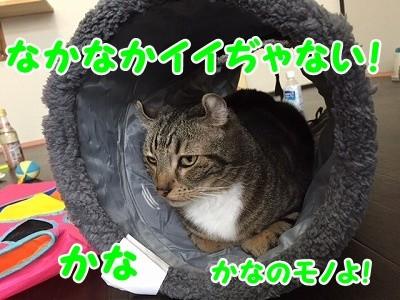かな (41)
