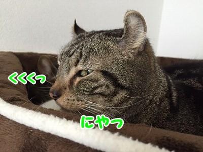 かな (35)