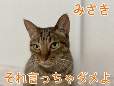 みさき215