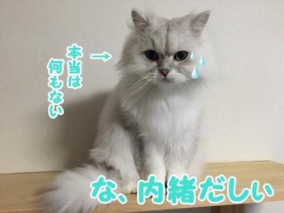 風 (47)