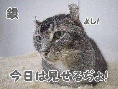 銀 (9)