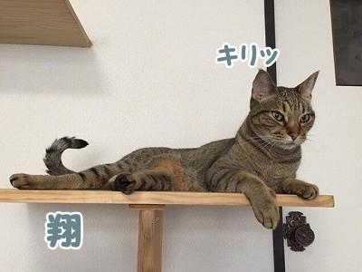 翔 (75)