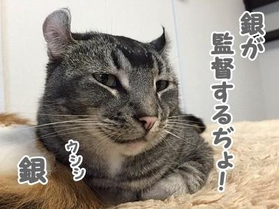 銀 (85)