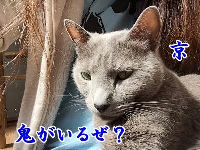 京 (40)