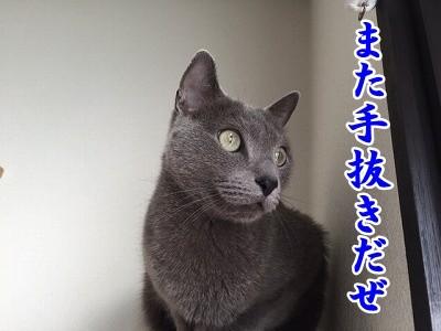 京 (20)