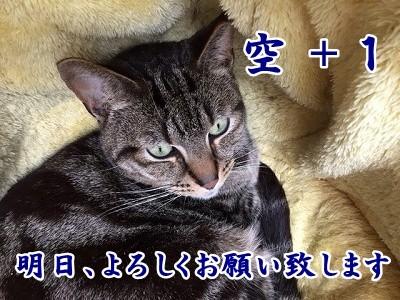 空 (11)
