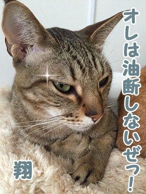 翔 (38)