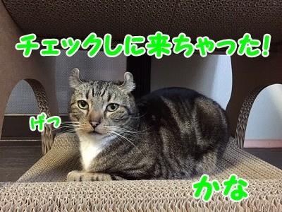 かな (45)