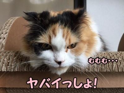 さよ (11)