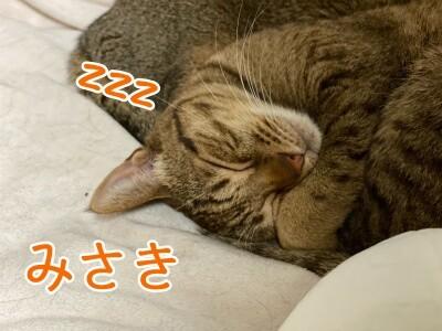 みさき238