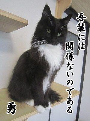 勇 (7)