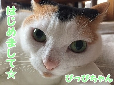 ぴっぴ (2)