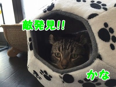 かな (27)