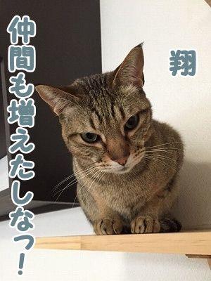 翔 (23)