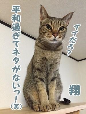 翔 (54)