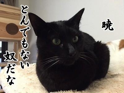 暁 (6)