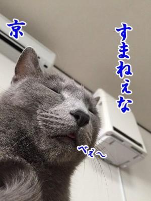 京 (41)
