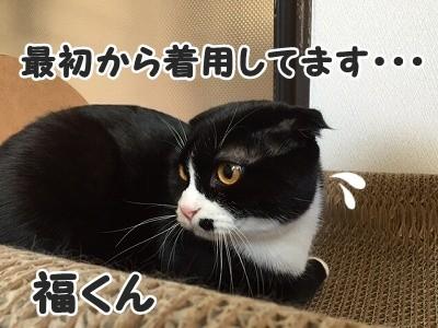 ふく (11)