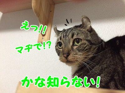 かな (29)