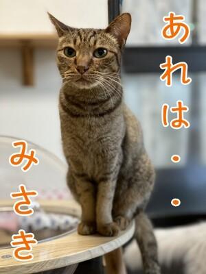 みさき217