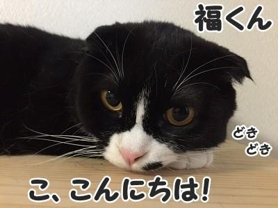 ふく (14)