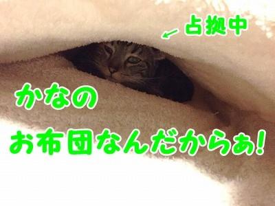 かな (31)