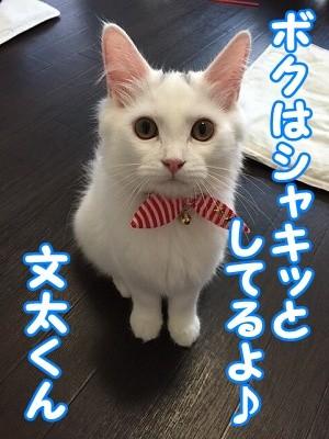 ぶん・マロ (5)