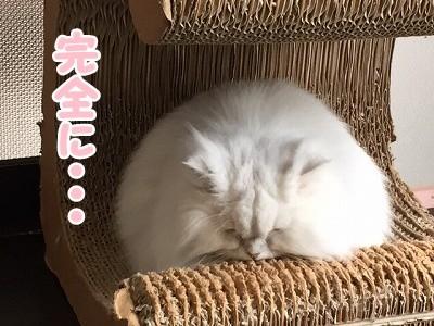 らん (6)
