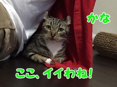 かな (78)