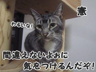 憲 (4)