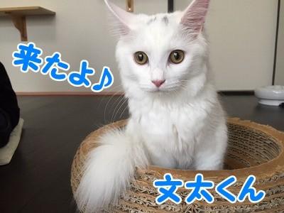 ぶん・マロ (6)