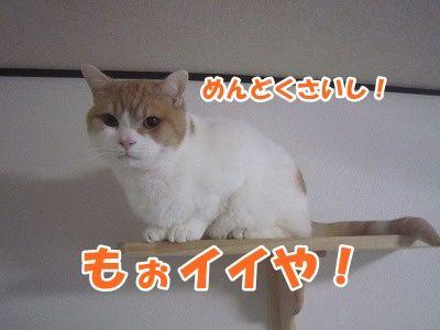 煌 (4)