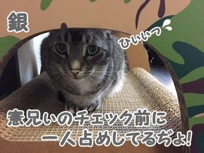 銀 (55)