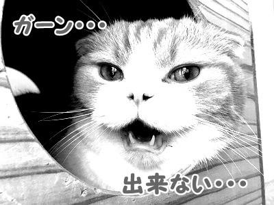 雫・陽 (36)