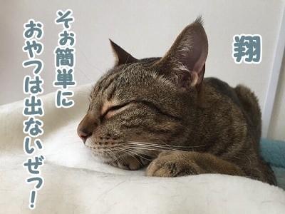 翔 (77)