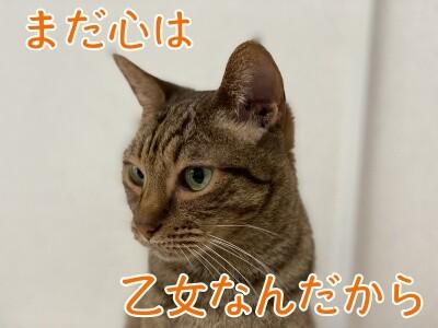 みさき216