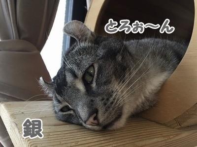 銀 (80)