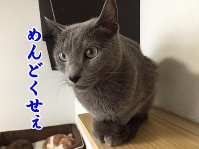 京 (18)