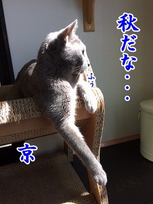 京 (69)