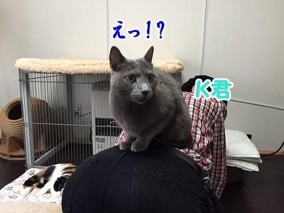 京 (36)