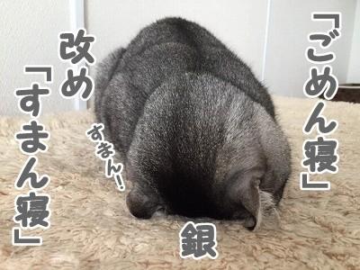 銀 (45)