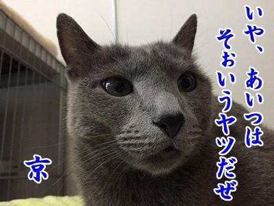 京 (45)