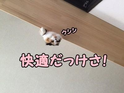 さよ (17)