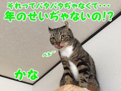 かな (49)