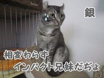 銀 (3)
