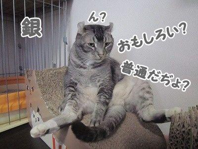 銀 (4)