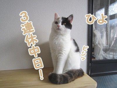 ひよ (3)