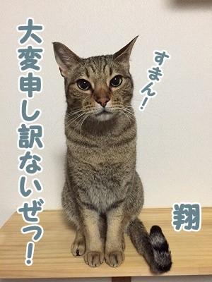 翔 (81)