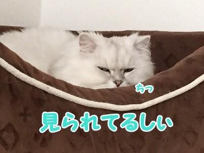 風 (35)