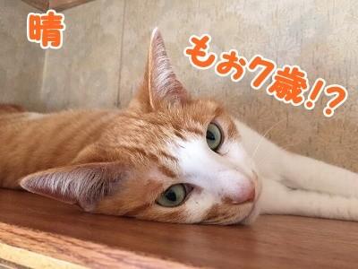 晴 (2)